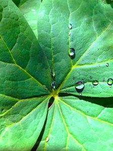 Leaf - Janet Malsam