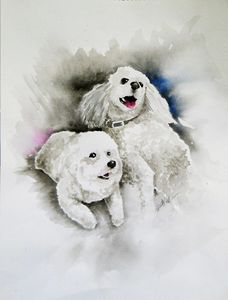 Two Fluffy Dogs