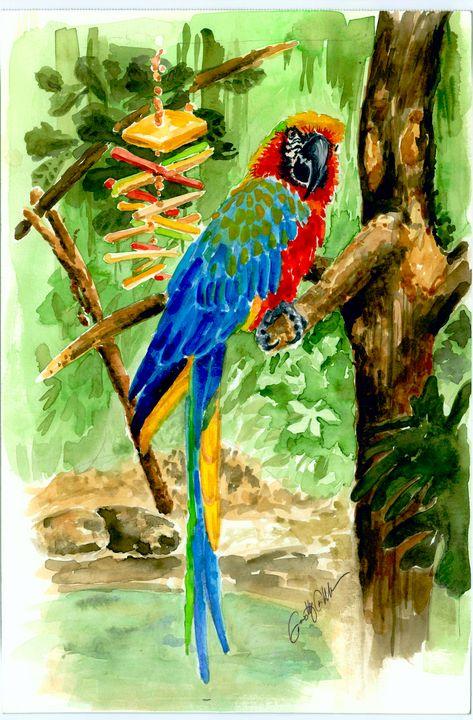 Simon the Macaw - Timothy Fahrbach