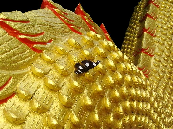 Butterfly on a Dragon - Aleksei lomanov