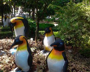 penguins in the tropics - Aleksei lomanov