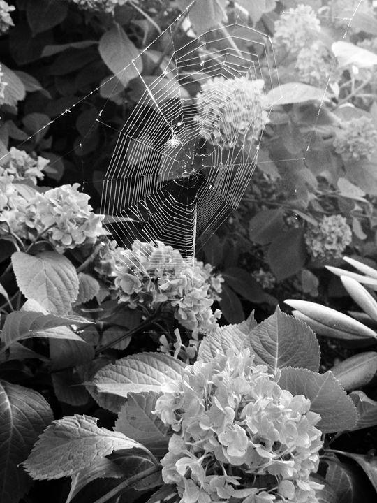 Pristine Thread - Dreamer's Shutter Photography :: Amanda Gloth
