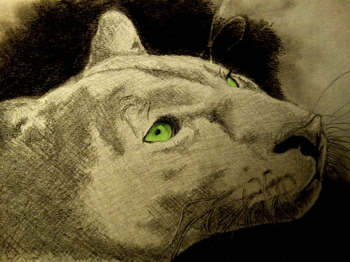Cougar the Mountain Lion - Wildlife on Paper