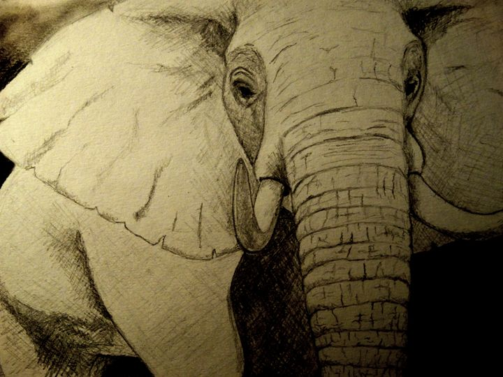 African Elephant - Wildlife on Paper