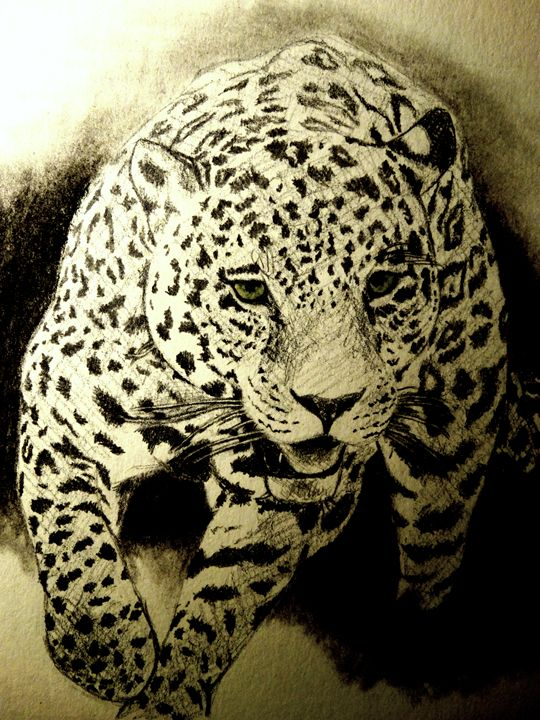 Jaguar - Wildlife on Paper