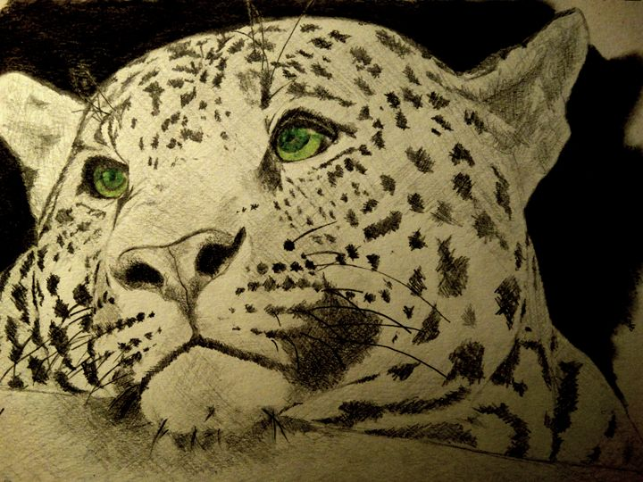 Leopard - Wildlife on Paper