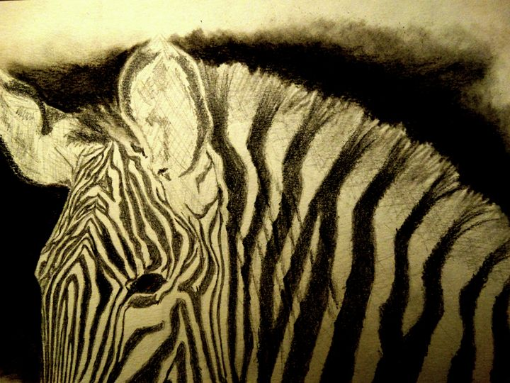 Zebra - Wildlife on Paper