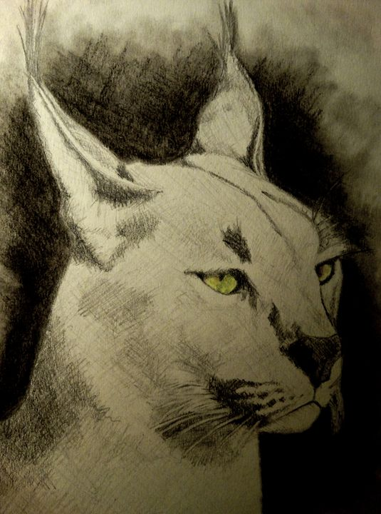 Caracal-African Wild Cat - Wildlife on Paper