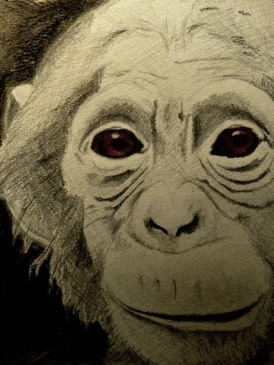 Chimpanzee - Wildlife on Paper