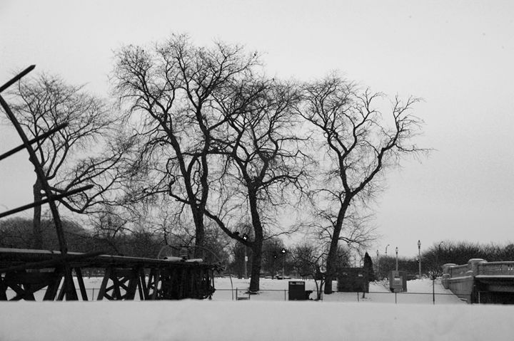 snow trees - Boris