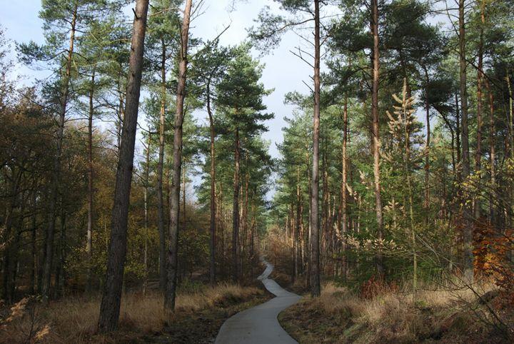 Nature Trail - Hokes Creations