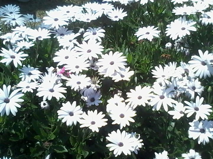 Princess of Flowers - Broad Way Thinkers