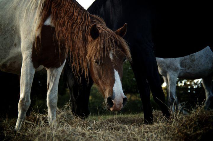 Dark Horse Portrait - Travis Baars Photography