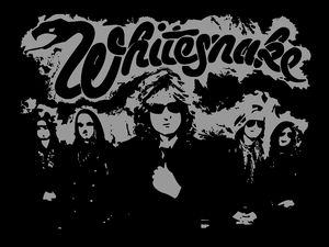 Whitesnake Grey