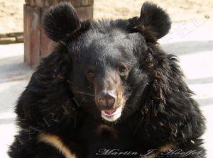 Black Bear model grinning