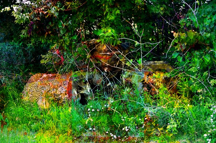 Trees Abstract PhotoArt - PhotoArt By Darla