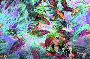 Tropical Rain PhotoArt