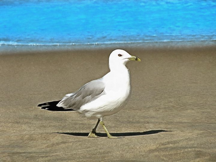 Seagull On Sandy Shore PhotoArt - PhotoArt By Darla