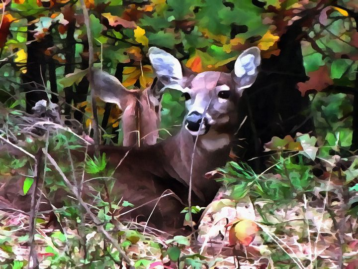 Deer Resting in Woods PhotoArt - PhotoArt By Darla