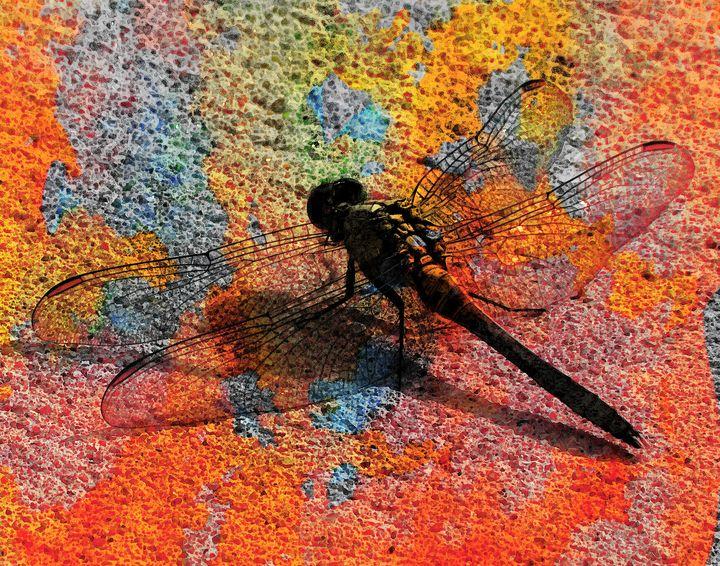 Dragonfly on Sand PhotoArt - PhotoArt By Darla
