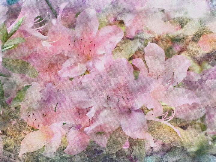 Pink Azalea Flowers PhotoArt - PhotoArt By Darla