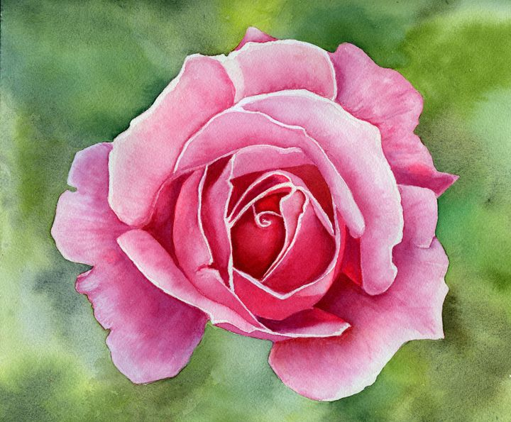 Just a Pink Rose - Roxie Colors