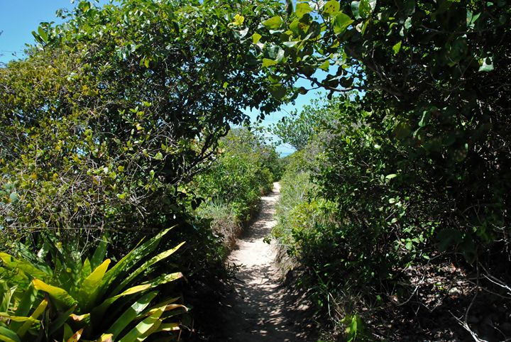The green path - RN - Brazil - SEVEN