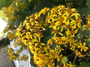 Yellow Swarm