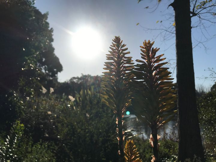 Shadow of Pines - Suburban Flower