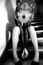 Zwolftel Wolf
