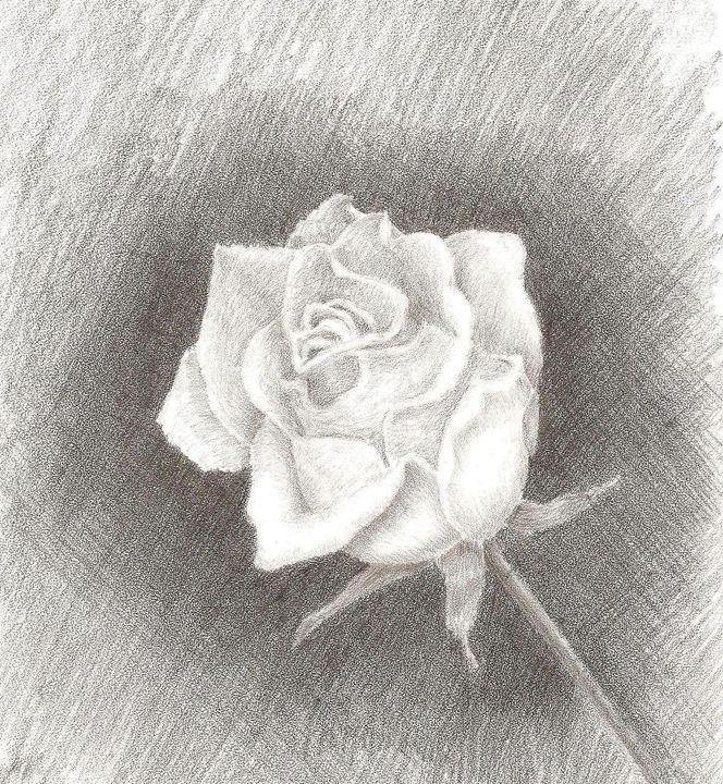 Rose - Yana Solare Art