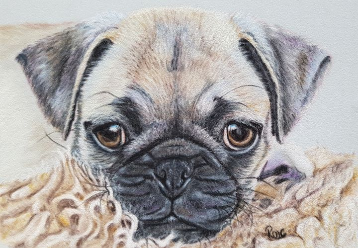 Snug Pug - Pastel Art by Rebecca