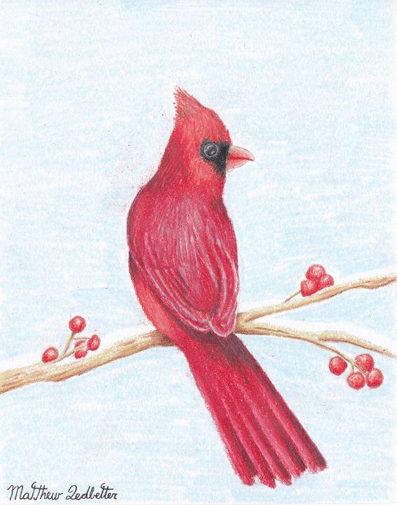 Cardinal on a limb - Matthew Ledbetter