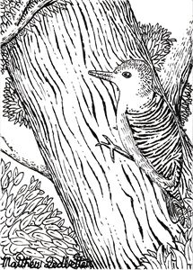 woodpecker up a tree