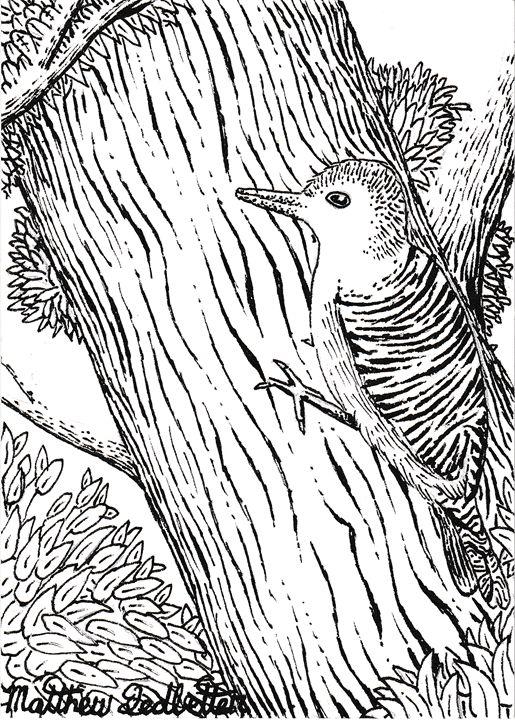 woodpecker up a tree - Matthew Ledbetter