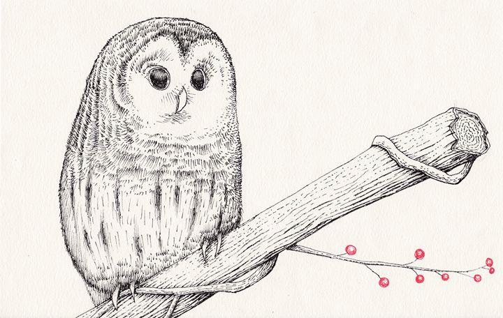 owl on a limb - Matthew Ledbetter