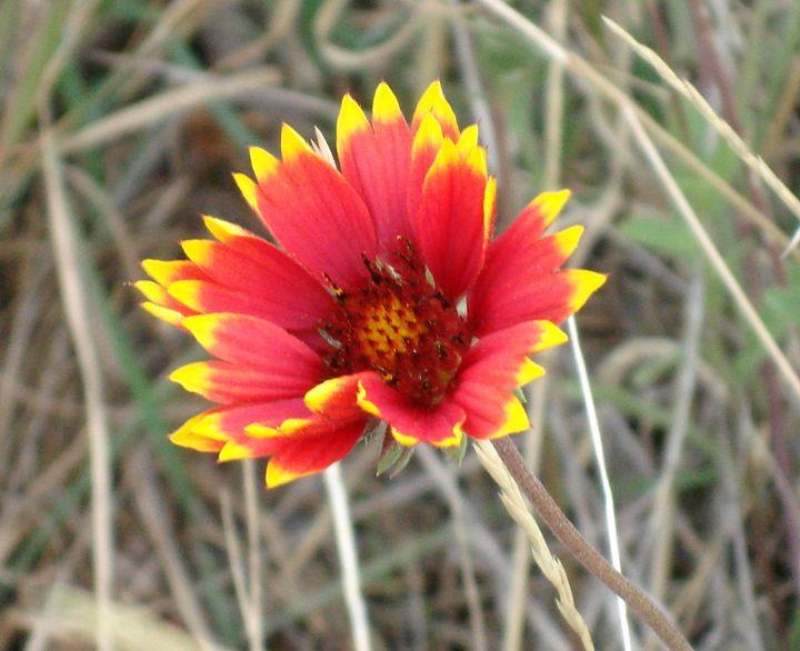Mountain Flower - Riley Raiynes Gallery
