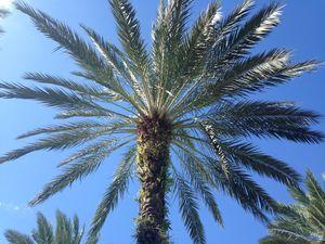 Palm -  Dana.landes