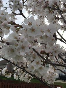 Spring -  Dana.landes