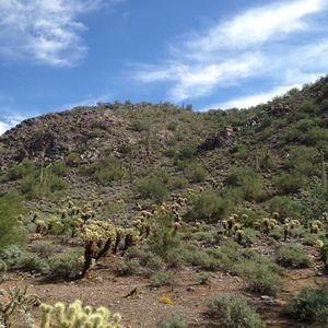 Desert day -  Dana.landes