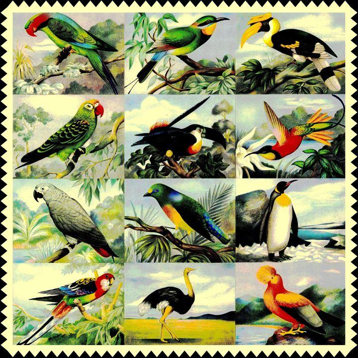 12 Birds - Connie Goldman Gallery