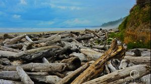 Oregon - Cannon Beach - Logs 14