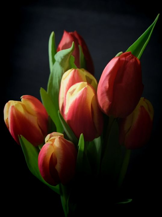 Tulips at Night - Rocket Cottage Photography