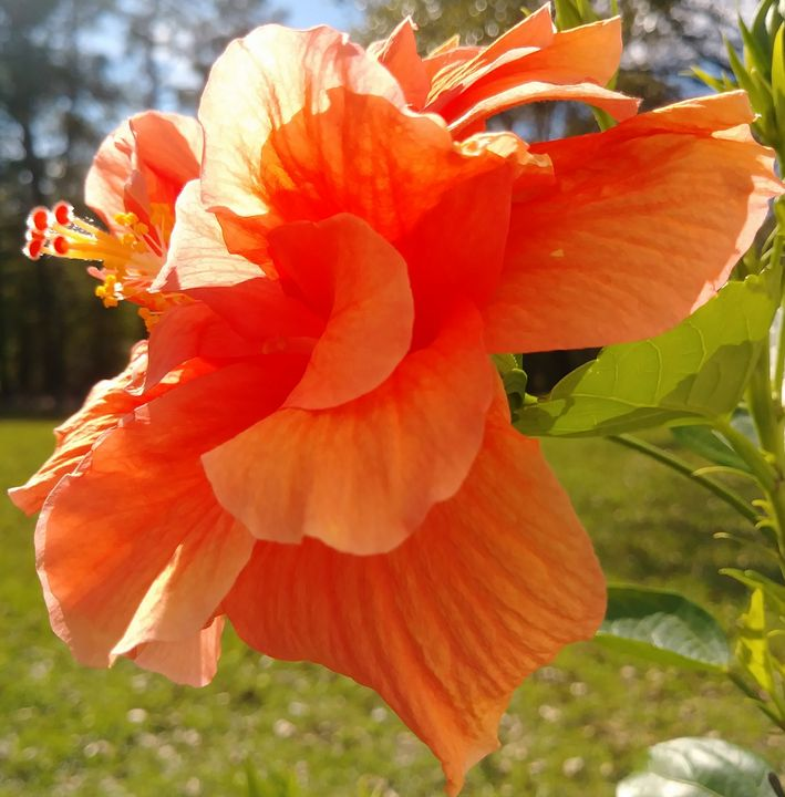 The Tangerine Queen - B. Lanée Galloway PhotoArt
