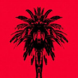 Palm Tree - Red Sky