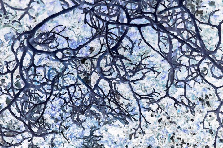Roots - Edouard Morningstar
