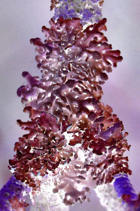 Purple Seaweed - Edouard Morningstar