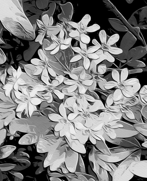Black and white floral art - Karen Harding Artist