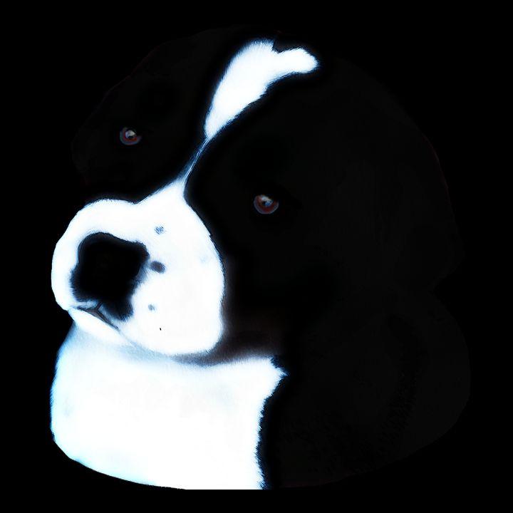 Black and White Puppy - Karen Harding Artist