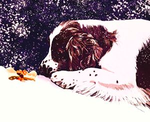 Puppy in the Snow - Karen Harding Artist